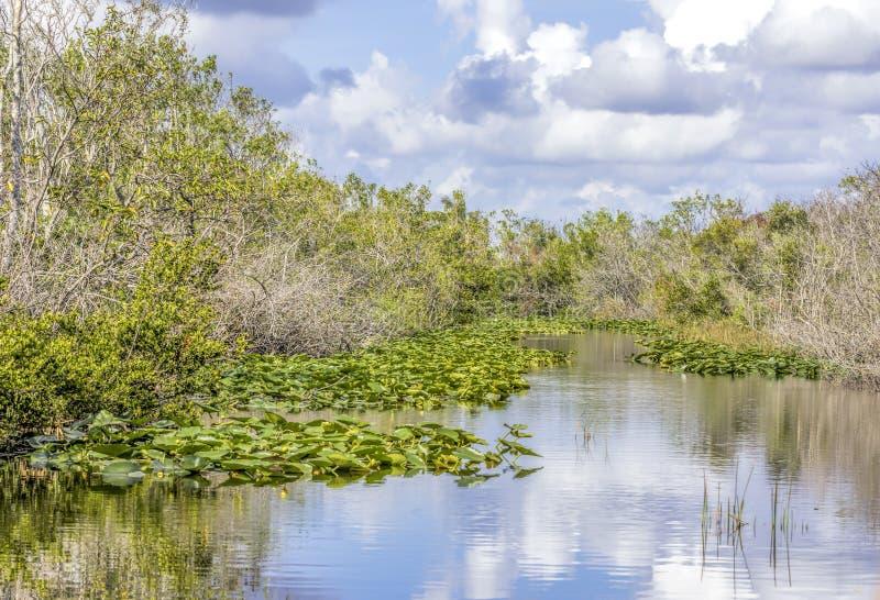 Лилии и sawgrass растя на водном пути в национальном парке болотистых низменностей в Флориде, США стоковые фотографии rf
