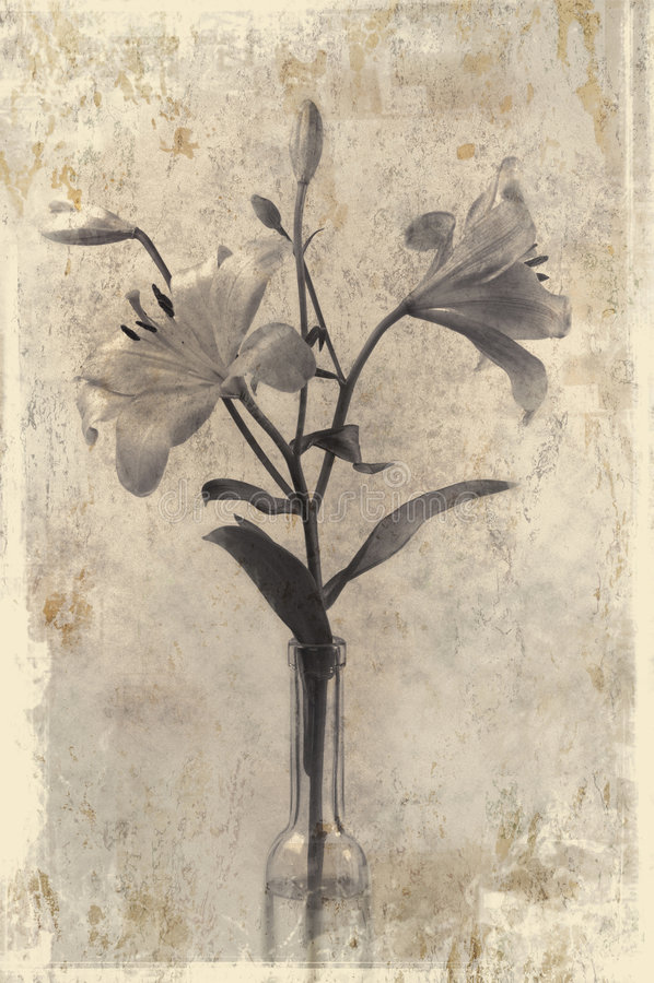 Download лилии Grunge вводят 2 в моду Иллюстрация штока - иллюстрации насчитывающей лилии, лилия: 486279