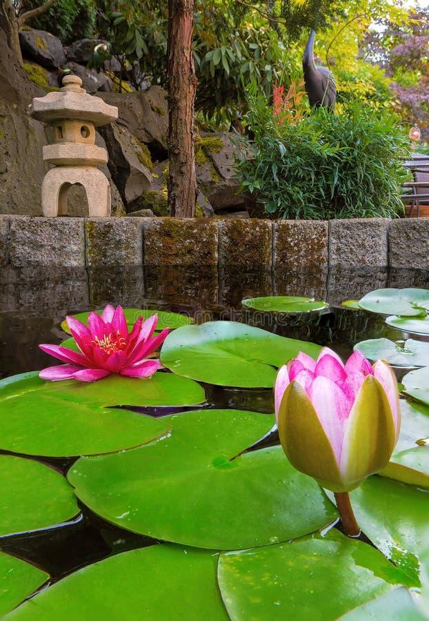 Лилия воды зацветая в пруде задворк с каменным фонариком стоковые изображения