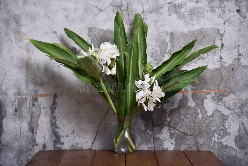 Лилия имбиря стоковое изображение