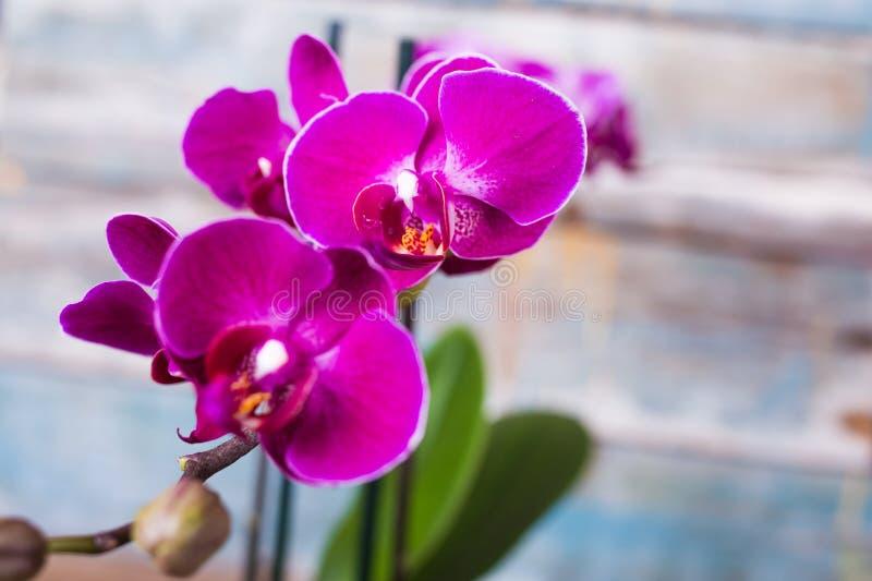 Лиловая орхидея стоковое фото rf