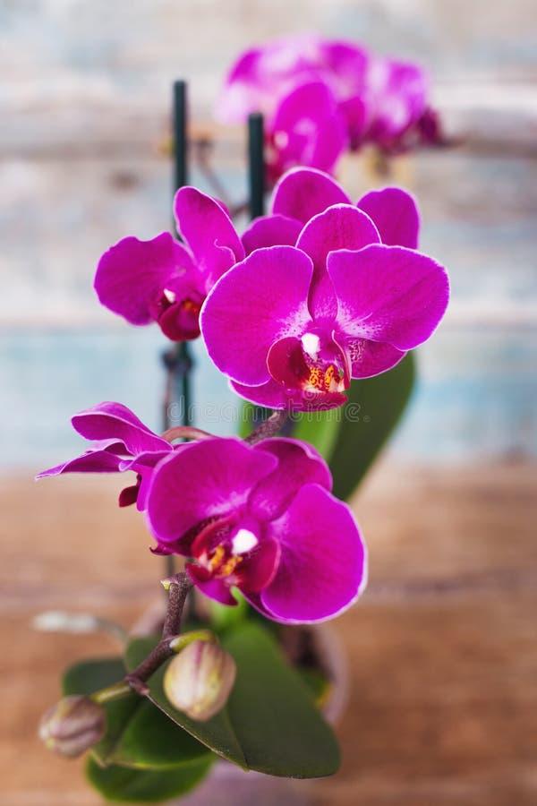 Лиловая орхидея стоковые фотографии rf