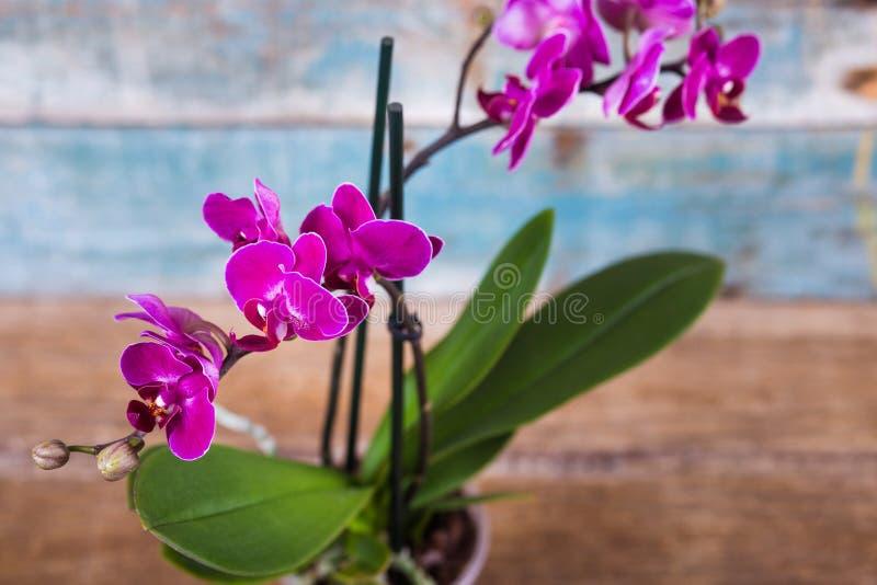 Лиловая орхидея стоковые фото