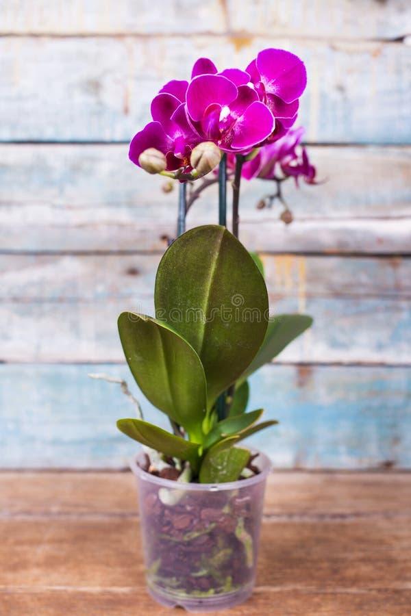 Лиловая орхидея стоковые изображения