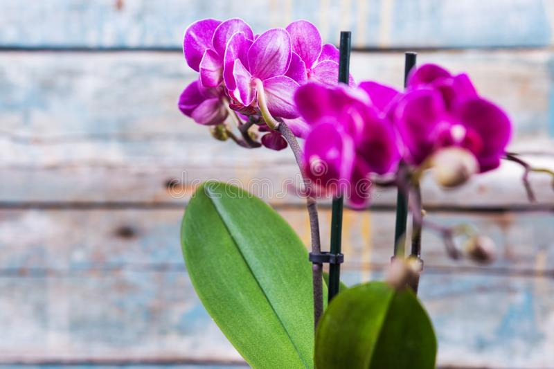 Лиловая орхидея стоковое изображение