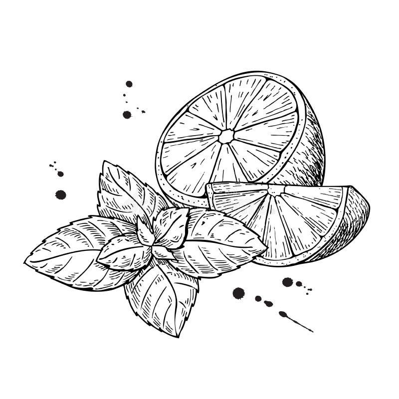 Лимоны и мята вектора белизна изолированная предпосылкой иллюстрация вектора
