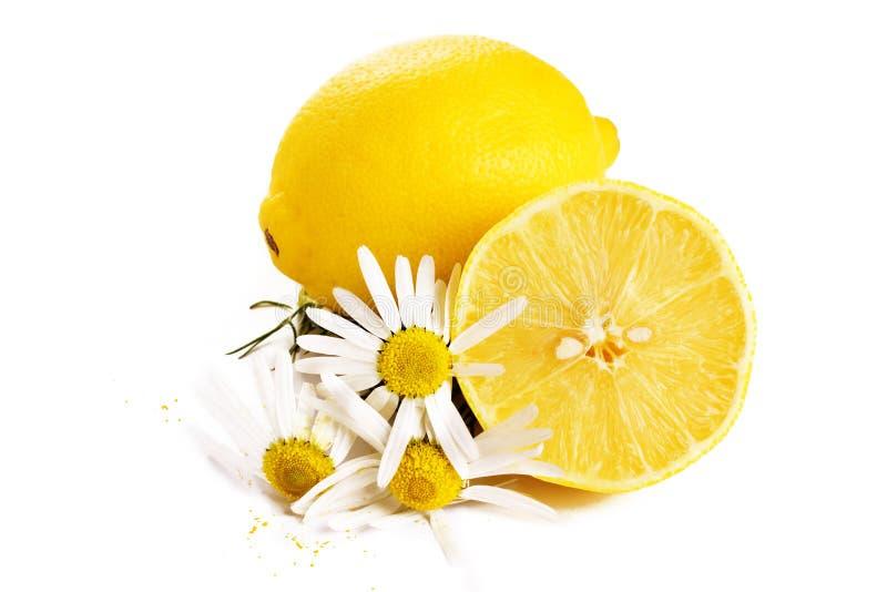 лимон стоцвета стоковое изображение