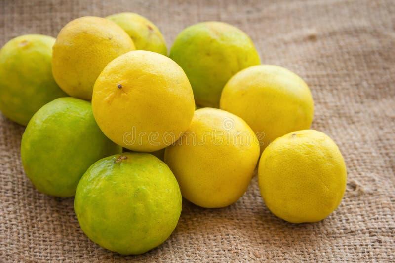 Лимон стоковые фото