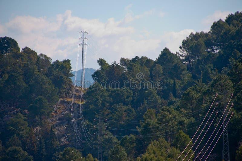 Линии электропередач режа через лес стоковое изображение rf
