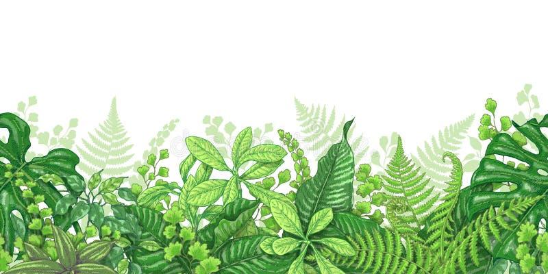 Линия горизонтальная граница тропических заводов бесплатная иллюстрация