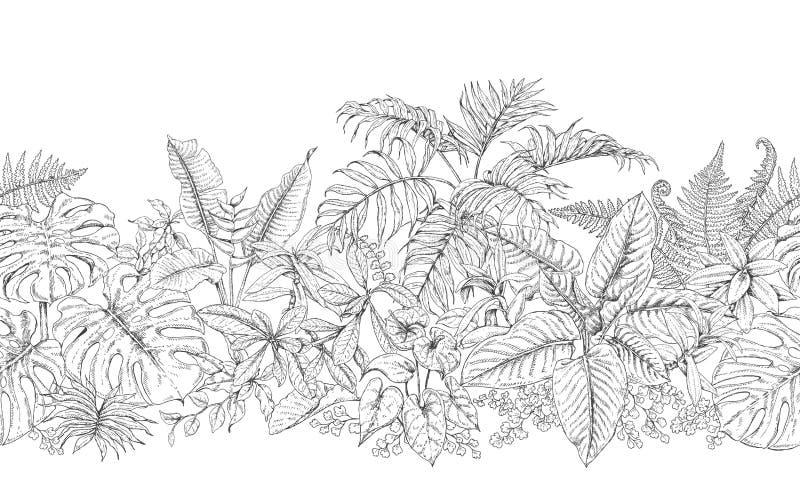 Линия горизонтальная картина тропических заводов иллюстрация вектора