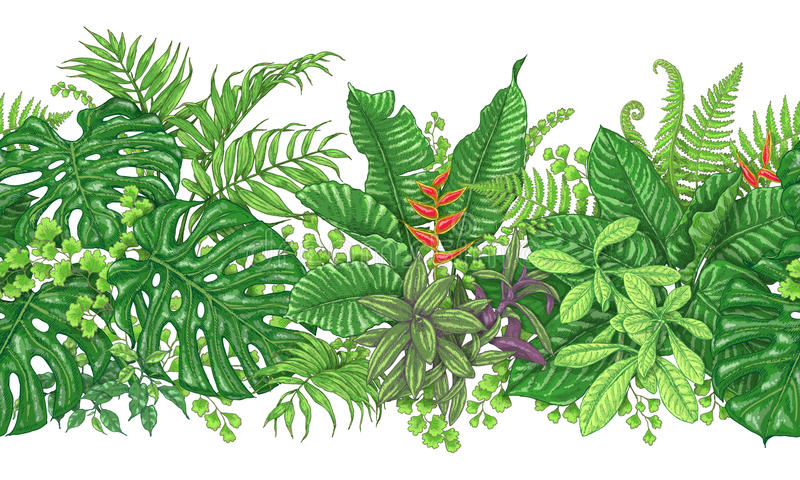 Линия горизонтальная картина тропических заводов иллюстрация штока
