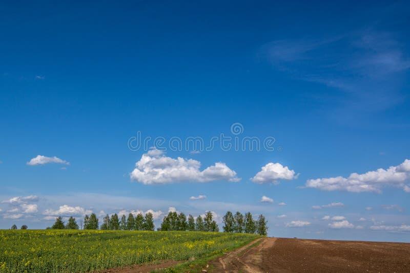 Линия деревьев стоковые изображения rf