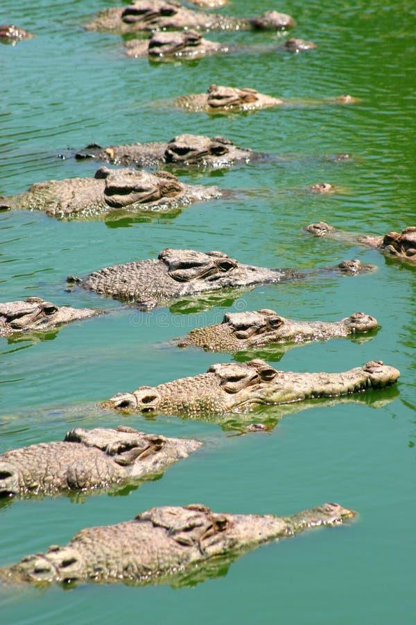 Download линия ждать стоковое фото. изображение насчитывающей крокодил - 492676