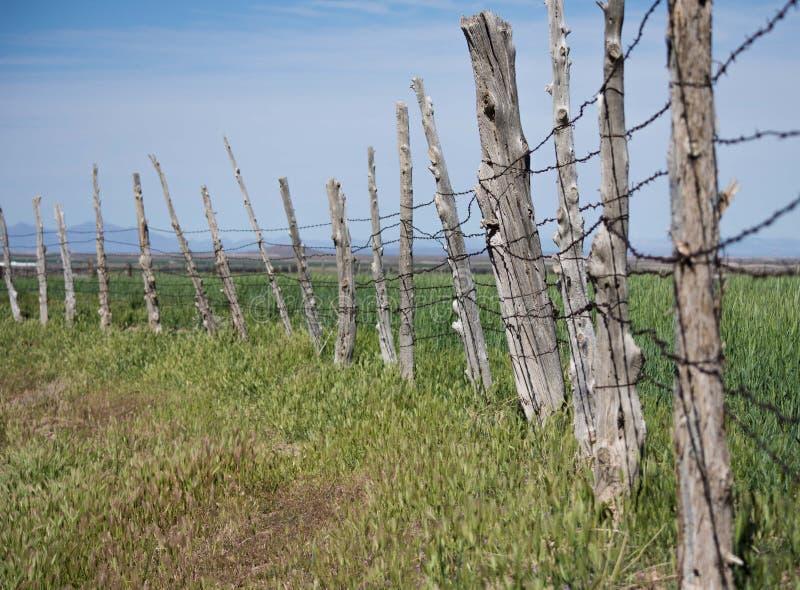 Линия загородки поляка сосны стоковая фотография