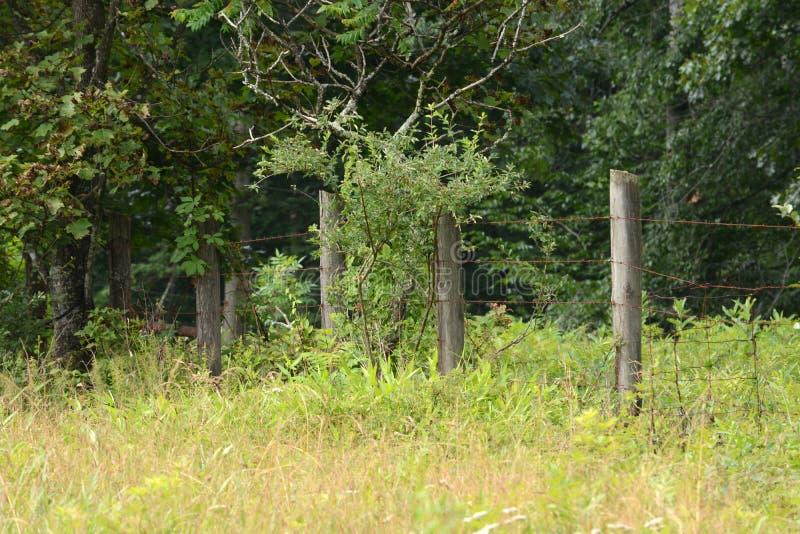 Линия загородки стоковое изображение rf