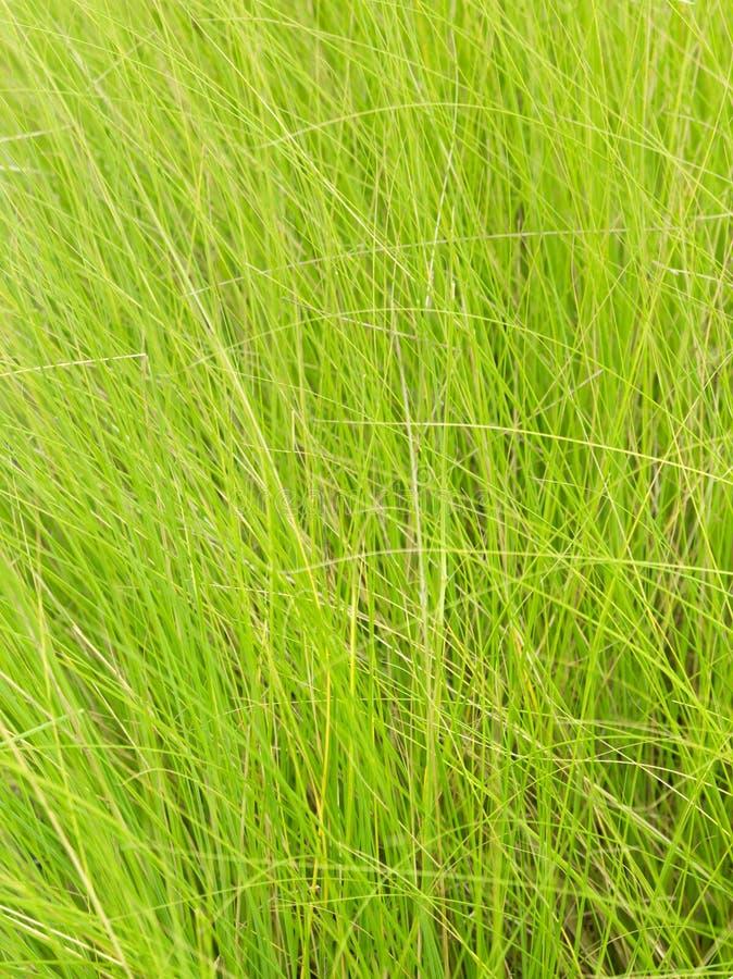 Линия зеленой травы для предпосылки стоковые изображения