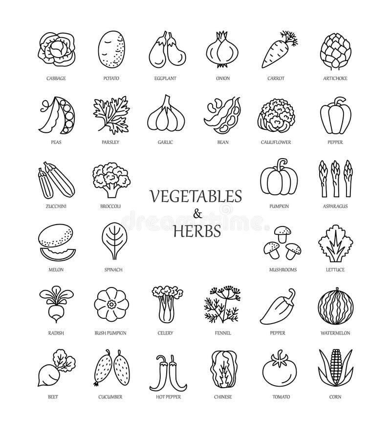 Линия значки вектора с овощами и травами иллюстрация вектора