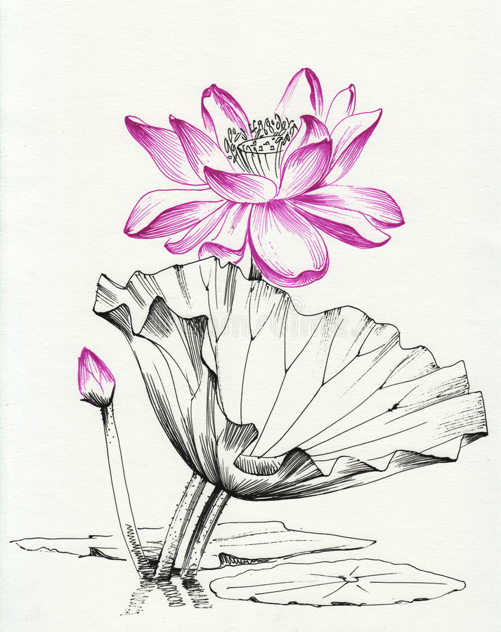 Линия искусство цветка лотоса иллюстрация штока
