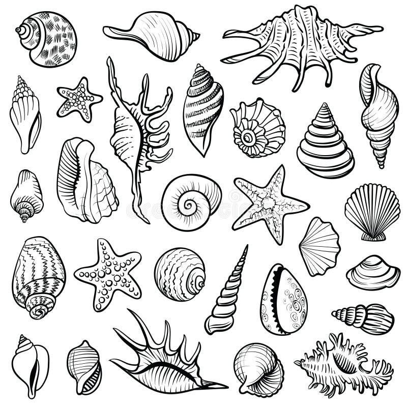 Линия комплект вектора раковин моря Черно-белые иллюстрации doodle иллюстрация вектора
