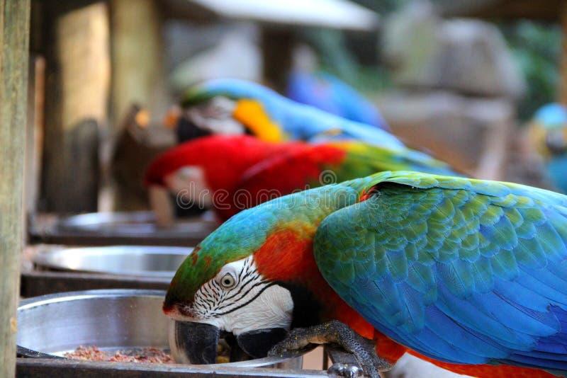 Линия красочных ар на обеденном времени стоковые изображения rf