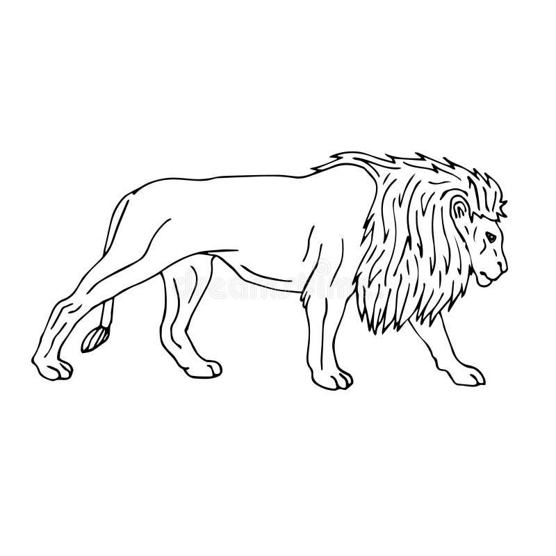Линия лев черноты вектора эскиза doodle руки вычерченный иллюстрация штока