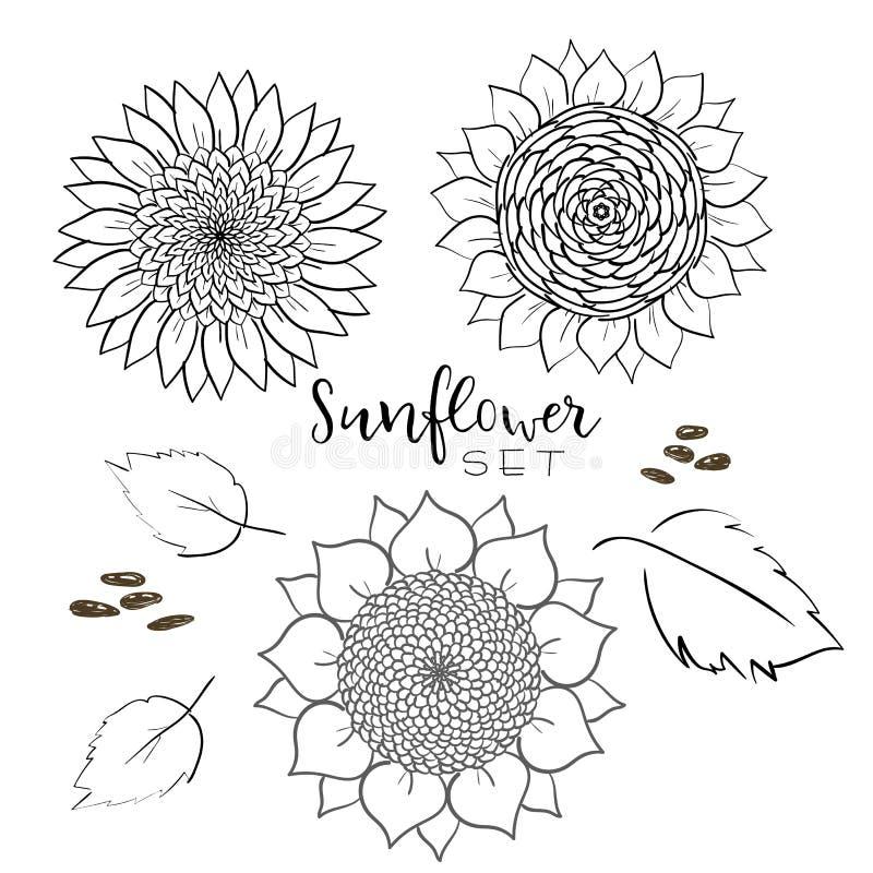 Линия набор семян подсолнуха и цветка чертежа вектора Иллюстрация руки вычерченная изолированная Эскиз пищевого ингредиента винта бесплатная иллюстрация
