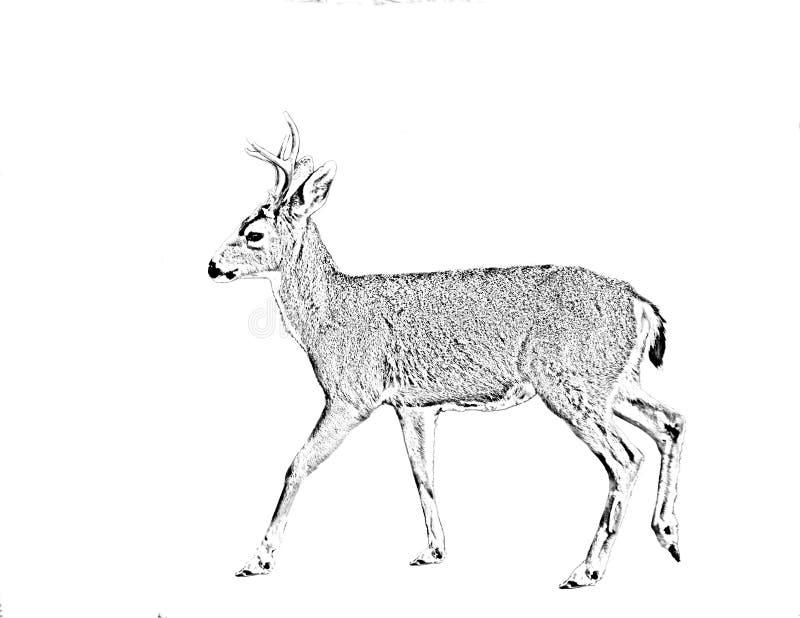 Линия обработка искусства Черно-замкнутого оленя бесплатная иллюстрация