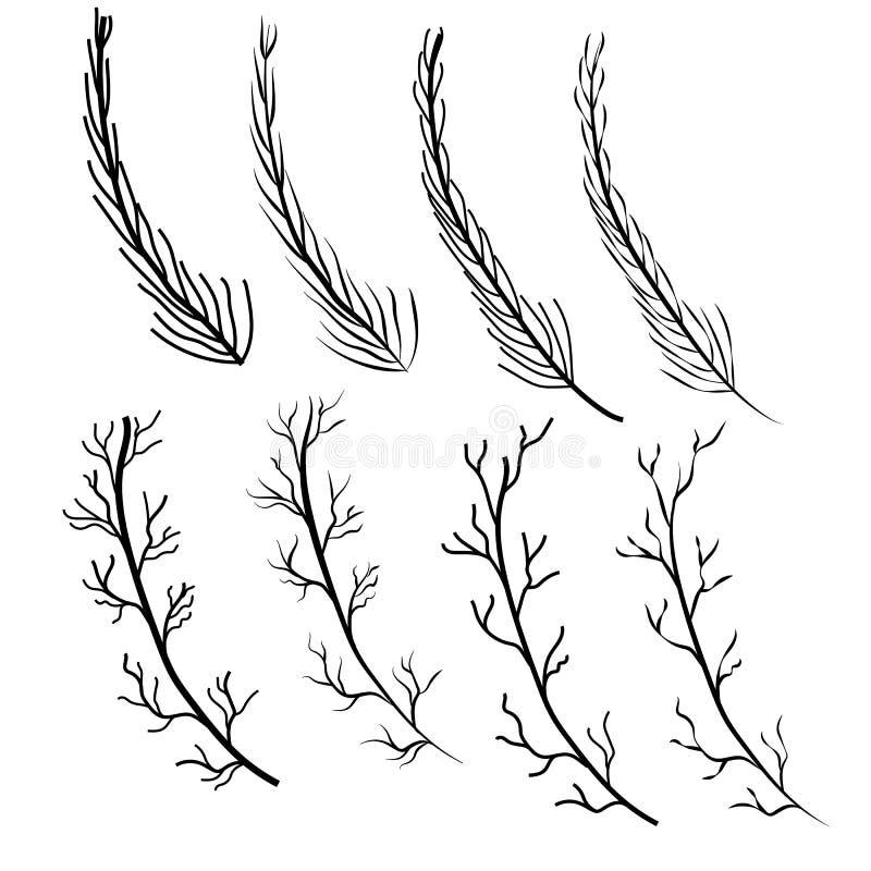 Линия природы цветня дерева ветви плодолистика цветня иллюстрация штока