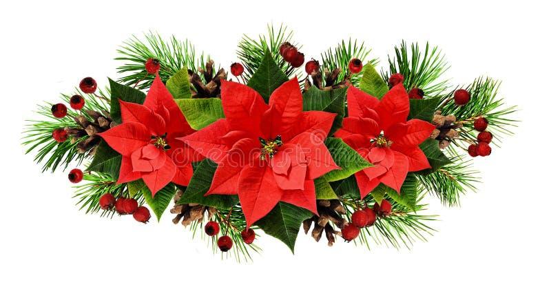 Линия расположение рождества с хворостинами, конусами, и poinsetti сосны стоковая фотография rf