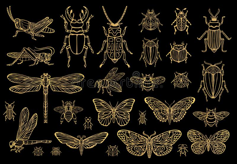 Линия сильной руки вычерченная золотая установила ошибок насекомых, жуков, пчел меда, бабочки, сумеречницы, шмеля, оси, dragonfly иллюстрация вектора