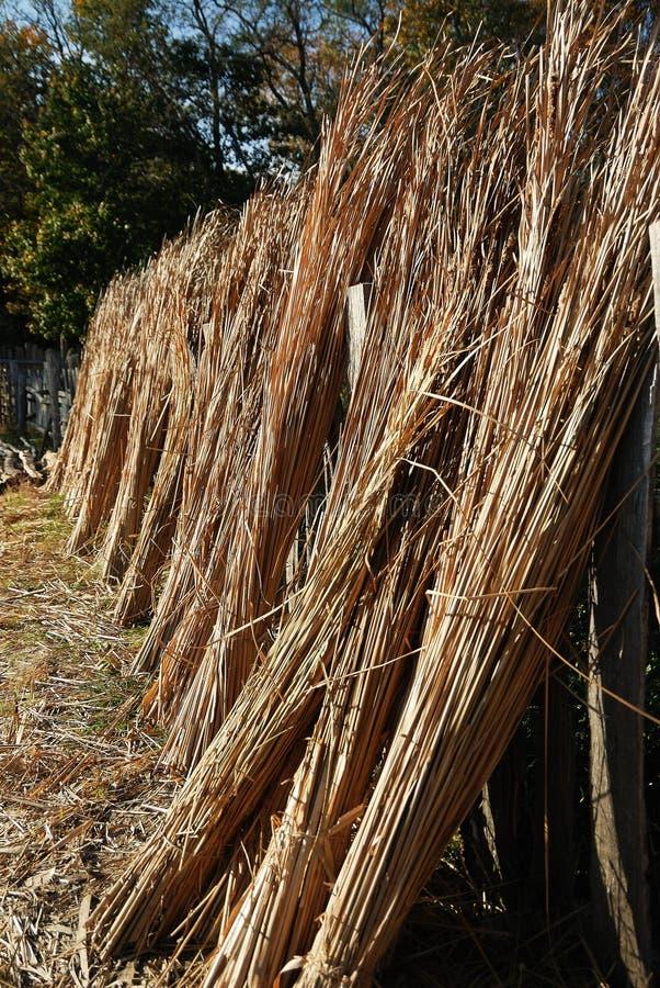 линия тростники стоковые фото