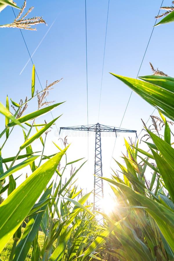 Линия электропередач над кукурузным полем символизируя зеленую энергию стоковое изображение