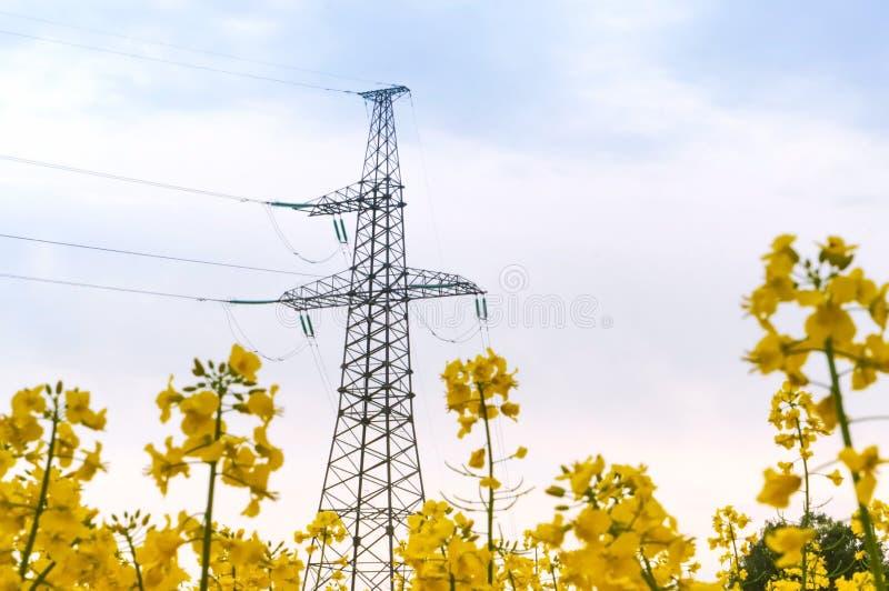 Линия электропередач среди желтых wildflowers, линия электропередач в поле стоковые фотографии rf