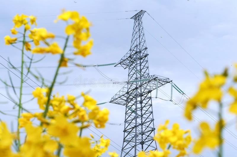 Линия электропередач среди желтых wildflowers, линия электропередач в поле стоковые изображения rf