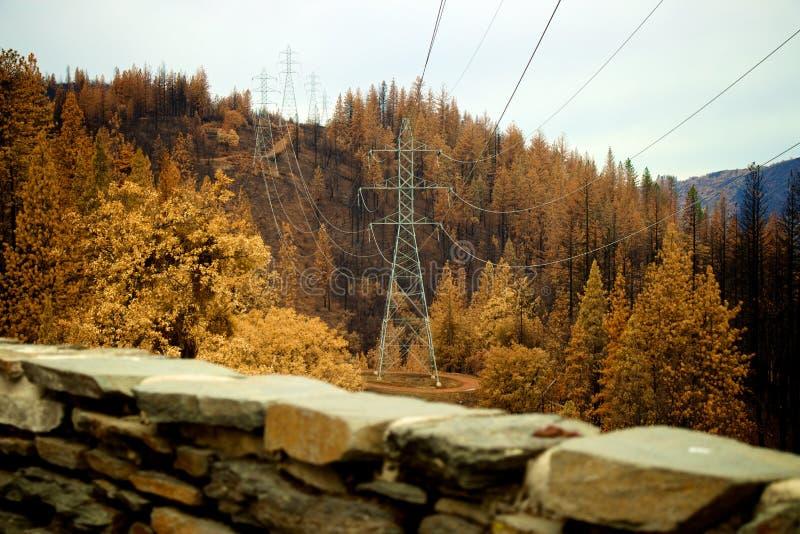 Линия электропередач через лес стоковое изображение