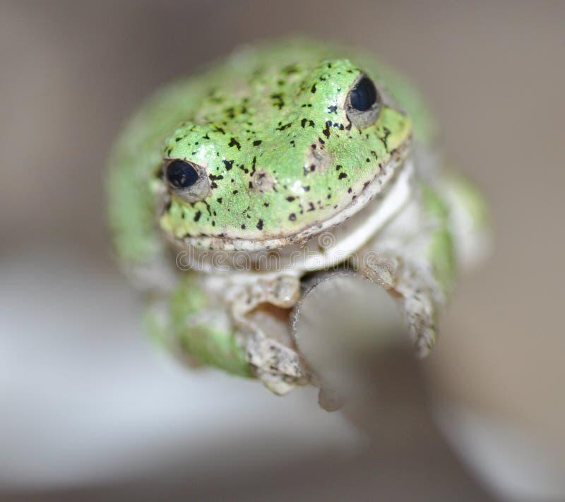 Липкая жаба стоковое изображение