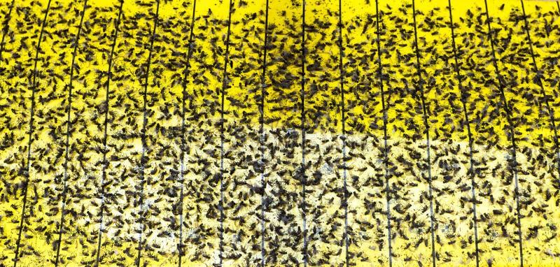 липкая лента стоковое изображение rf