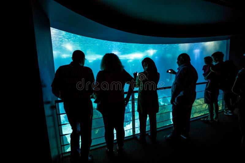 Лиссабон Oceanarium Португалия стоковое фото