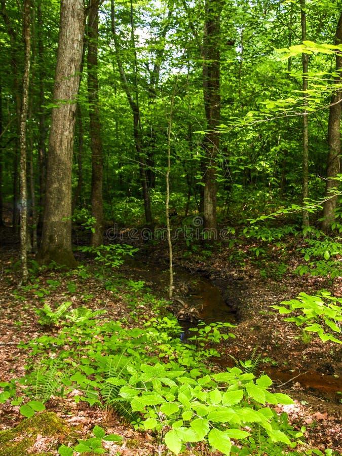 Листва вдоль небольшого потока в заповедниках каскадов стоковое изображение