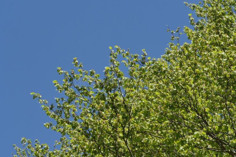 Листва в голубом небе в французской сельской местности стоковая фотография