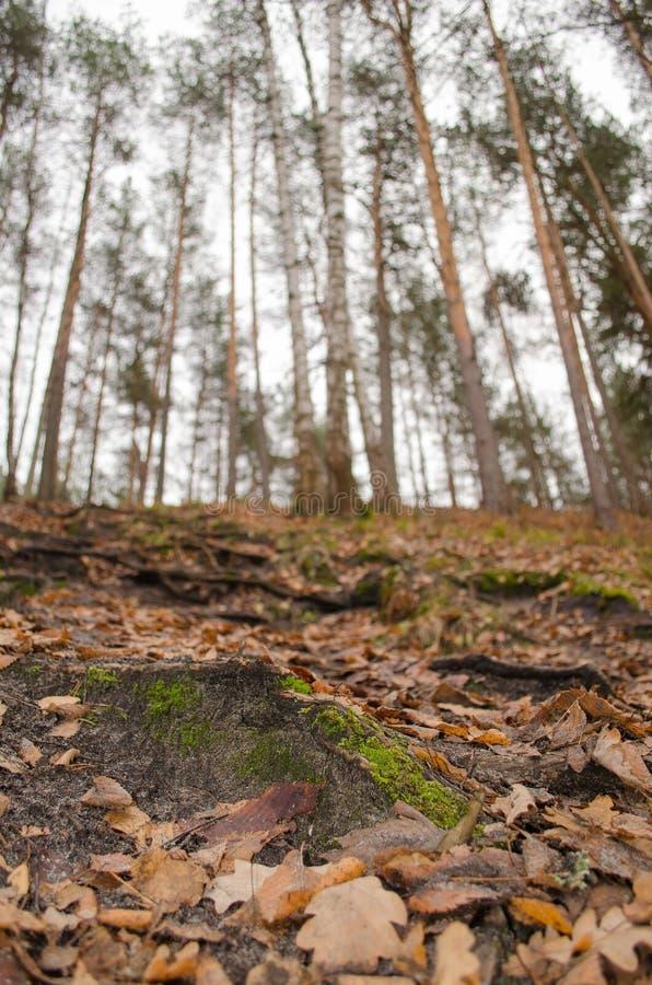 Листва в лесе от земли в последней осени стоковое изображение