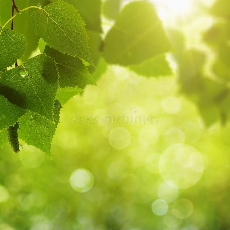 Download Листва лета стоковое изображение. изображение насчитывающей свежесть - 40591569