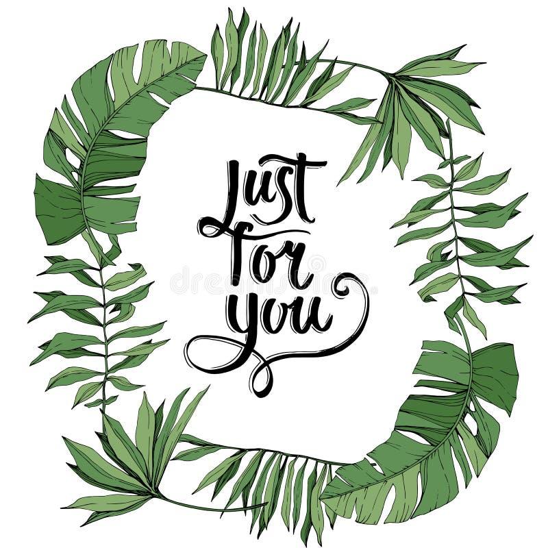 Листва завода лист зеленого цвета вектора ботаническая Выгравированное искусство чернил Листья дерева Palm Beach Квадрат орнамент иллюстрация вектора