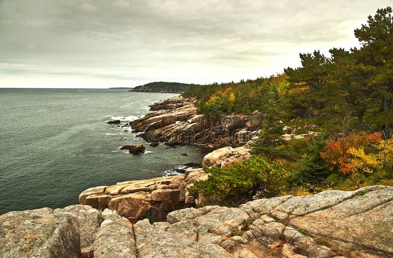 Листва национального парка Acadia стоковое изображение