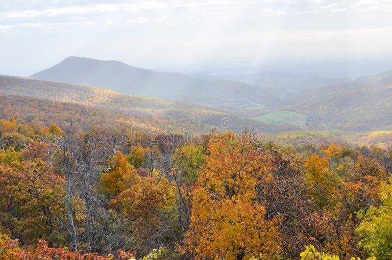 Листва осени в национальном парке Shenandoah - Вирджинии Соединенных Штатах стоковые фотографии rf