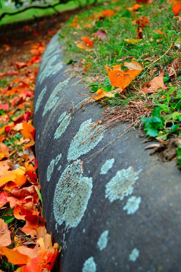 Листва осени в парке стоковое фото rf