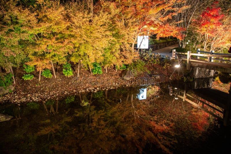 Листва осени клена живая в Nabana отсутствие парка Sato, Японии стоковое фото