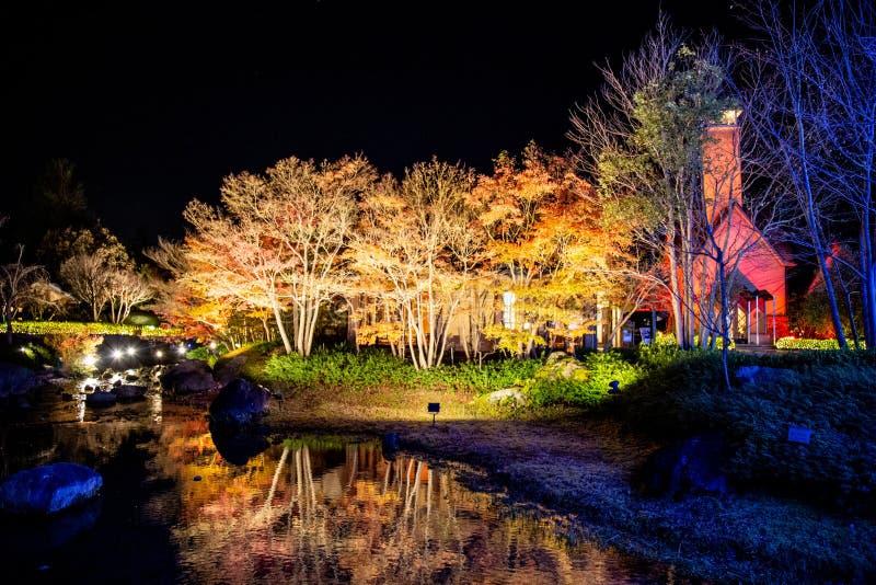 Листва осени клена живая в Nabana отсутствие парка Sato, Японии стоковые изображения rf