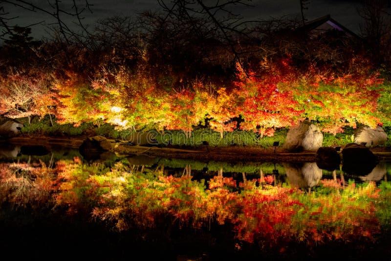 Листва осени клена живая в Nabana отсутствие парка Sato, Японии стоковое изображение rf
